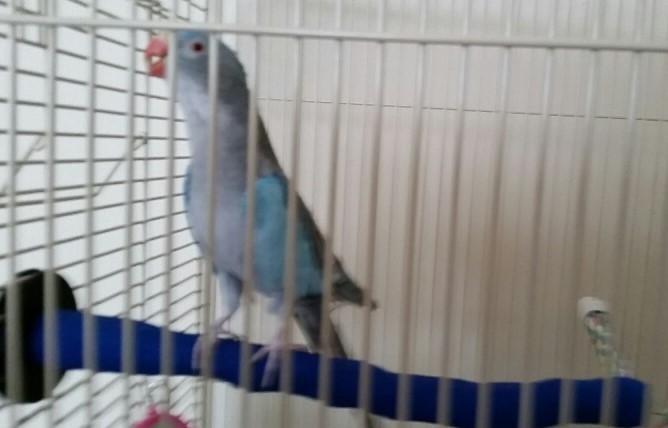 ergonomic sand perch